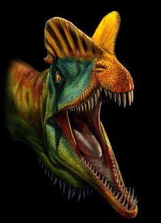 DILOPHOSAURUS | Dilophosaurus