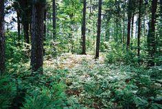 forest.jpg 1,000×676 pixels