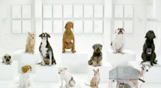 So what was your favorite Super Bowl ad? http://cnet.co/xJReLL