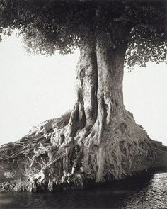 Herb Ritts - Nangini, Giant Fig Tree, Africa, 1993. S) Love the black and white