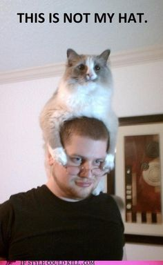 The cat is the hat!