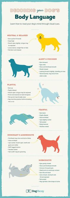 Decoding Your Dog's Body Language in Any Situation Everything you need to know about beagles Training Your Puppy, Dog Training Tips, Potty Training, Training School, Training Classes, Training Videos, Dog Care Tips, Pet Care, Puppy Care