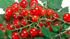 11rad, jak předcházet plísňovým chorobám rajčat: plísni bramborové (Phytophthora infestans)a plísni šedé(Botrytis cinerea) nebolo šedé hniloby rajčat Pesto, Stuffed Peppers, Vegetables, Food, Gardening, Meal, Stuffed Pepper, Essen, Garten