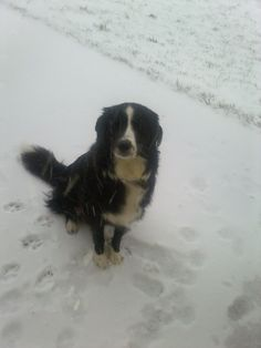 Another photo of a BIG dog in their Winter Wonderland for our Pretty BIG Dog Photography Competition