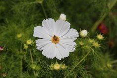 10 Flowers to grow with vegetables
