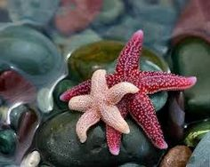 star fish images - Google Search