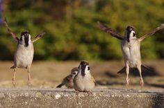 なにかしら、新しい儀式なのかなこれ#雀 #スズメ #すずめ #sparrow pic.twitter.com/FvnOqOwjyu— ...