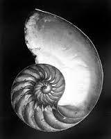 Karl Blossfeldt Spirals.
