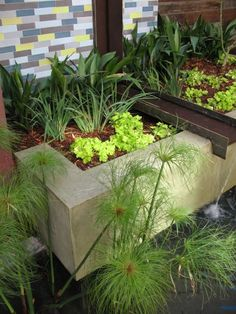 Pretty planting with water feature