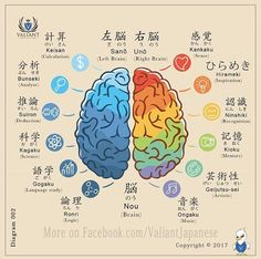 The brain and its divisions. -- Japan, Japanese words, vocabulary, learning different languages, infographic, kanji
