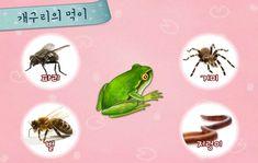 [어린이 자연관찰] 올챙이 성장과정과 개구리의 특징에 대해 알아보자(+영상) : 네이버 블로그 Enamel, Vitreous Enamel, Enamels, Tooth Enamel, Glaze