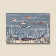 Sladkovodné ryby