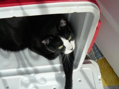 Figaro and his hideout!