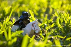 Darth Quixote by ~PrometheanPenguin on deviantART