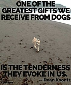 One of the greatest gifts we receive from dogs is the tenderness they evoke in us.