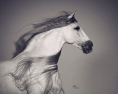 "8,926 Me gusta, 85 comentarios - Horsesplanet (@horsesplanet) en Instagram: ""Rate from 1 - 10 how beautiful is this horse #horsesplanet . . Photo: @viselphotography"""