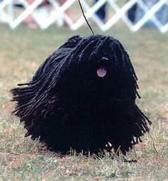 Mop dogs- they are so strange looking that they are just adorable.