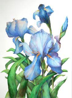 blue_irises.jpg