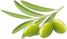 olivenoljekurs
