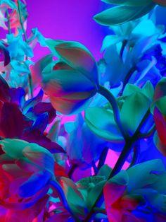Flowers  Interesting colors