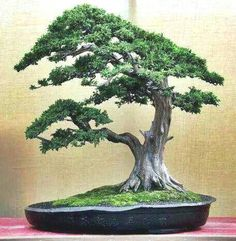 ֍☼Your #bonsai inspiration for the day!☺●       #BonsaiInspiration THE BEST HOME GARDENING GUIDE IS WAITING FOR YOU.