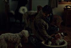 Hannibal Will Graham, Eat, Dogs, Animals, Animales, Animaux, Pet Dogs, Doggies, Animal