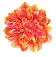 orange watercolor flower