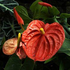 rainforest plants - Google Search