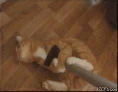E você tenta limpar o que ele suja, mas o teu gato sempre acha um jeito de te impedir.   16 coisas que só pessoas com gatos terríveis entendem
