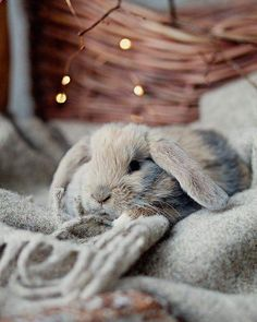 If you are searching for a furry friend that is not only extremely cute, but easy to have, then look no further than a pet rabbit. Cute Baby Bunnies, Cute Baby Animals, Animals And Pets, Funny Animals, Beautiful Creatures, Animals Beautiful, Fluffy Bunny, Image Clipart, Pet Rabbit