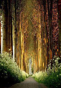 Magical Tree Tunnel, Belgium
