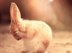 50 Bunnies That Are Much Cuter Than The Easter Bunny