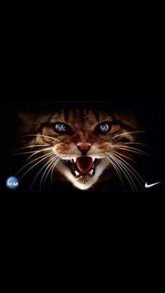 #Kentucky #UniversityofKentucky #Wildcats #UK #Champions #GoBigBlue #TheBlueGrassState #IBleedBlue #Basketball #BBN #NCAA #Nike
