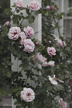 Captivating Why Rose Gardening Is So Addictive Ideas. Stupefying Why Rose Gardening Is So Addictive Ideas. Flowers Nature, Pink Flowers, Beautiful Flowers, Gerbera, Planting Succulents, Planting Flowers, Gardening Magazines, Pink Garden, Flower Seeds