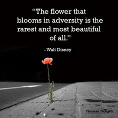 bloom where you are planted ✯