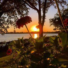 Lakeside landscape. #lakeminnetonka #minnesota #mn #exploremn #nature #fall #autumn #sunset #mnlakelife #lakelife #lake #minnetonka #tonka #waves #sun #water #orono #oronomn #falltime #iphone6s #flowers