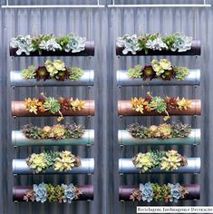 Six best show-stopping vertical gardens Hanging Succulents, Kids Decor, Cactus, Flowers, Plants, Vertical Gardens, Space Saver, Oasis, Diy