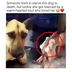 Dog Rescued On Very Critical Condition ♥️❤️ - Animals - Katzen, Hunde, Tiere Cute Funny Animals, Cute Baby Animals, Funny Cute, Animals And Pets, Cute Puppies, Cute Dogs, Canis Lupus, Funny Baby Quotes, Pet Quotes