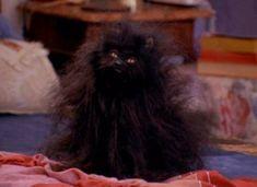 53 Ideas cats memes spirit animal for 2019 Sabrina Cat, Stupid Memes, Funny Jokes, Salem Cat, Salem Saberhagen, Russian Memes, F2 Savannah Cat, Reaction Pictures, Cat Memes