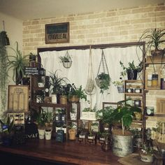 chobiさんの、部屋全体,植物,ハンドメイド,出窓,壁紙屋本舗,木箱リメイク,すのこ棚,ジャングル化,のお部屋写真