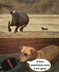 Комментарии к теме Stupid Memes, Funny Memes, Russian Jokes, Fnaf Characters, Survival Skills, Funny Photos, History, Cats, Animals