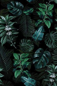 Purple Aesthetic Discover Tropical Garden II Canvas Art Print by Burcu Korkmazyurek Green Leaf Wallpaper, Plant Wallpaper, Tropical Wallpaper, Flower Phone Wallpaper, Iphone Background Wallpaper, Leaves Wallpaper, Dark Green Aesthetic, Plant Aesthetic, Tropical Background