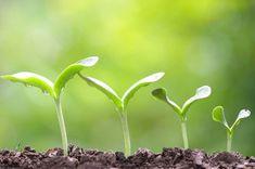 Uses Of Hydrogen, Hydrogen Peroxide Uses, Vegetable Garden Planning, Vegetable Garden Design, Small Yard Landscaping, Landscaping Plants, Beet Plant, Insect Repellent Plants, Lemon Seeds