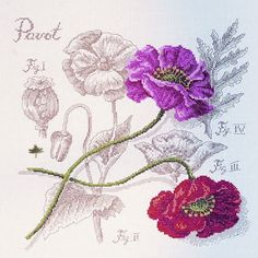 Poppy study kit   The French Needle   French Needlework Kits, Cross Stitch, Embroidery, Sophie Digard