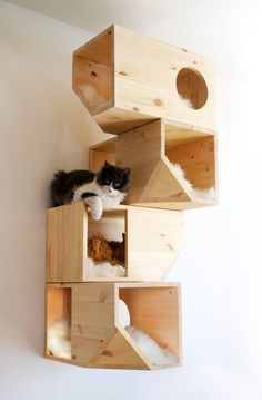 Geometrical Wooden Cat Tree Catissa imagines furniture for cats. One of their creations is a cat tree with geometrical shapes that can be fixed on the wall. Made from wood, this creation offers to. Cool Cats, Animal Projects, Diy Projects, Diy Jouet Pour Chat, Niche Chat, Diy Cat Toys, Dog Toys, Cat Shelves, Wooden Cat