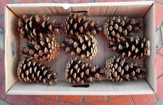 9 large pinecones from shillelagh woods autumnal and festive christmas
