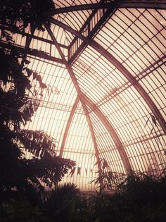 Kew Gardens. The greenhouse never fails to amaze me at the diversity of plants.