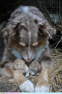"""I saw this and I was like """"AWWWW a dog and her little puppies! Oh wait those are bunnies."""" :D"""