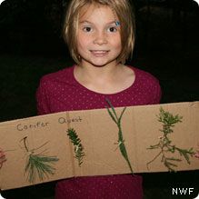 Go on a Conifer Quest: Learn about evergreen trees by making a Conifer Quest board.