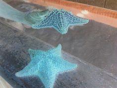 Estrellas de Mar,  En Acuario Punta Sur, Isla Mujeres, Q.R. Mexico